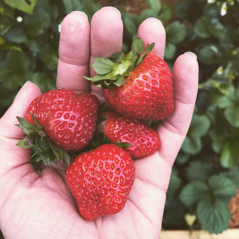 Eine handvoll Erdbeeren